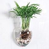 artlass Lot de 2Suspension Murale en Verre Cristal Fleur Vase Fleurs Terrarium Boîte Pot de fleurs