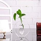 Bouteille en Verre Vase Rond pour Fleur Hydroponique Contenant Décoration pour Maison Transparent
