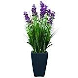 Europalms 61458 Plante de Décoration Lavande Pourpre en Pot 45 cm