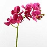 Lot 3 x Tige d'orchidée artificielle JASMIN, real touch, 7 fleurs, rose vif, 45 cm - 3 pcs Fleur artificielle ...