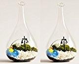 Lot de 2à suspendre Boule en verre Plante Vase Décoration pour terrarium côté Bouche 90mm