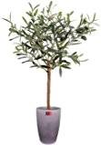 Olivier plant pot 60cm