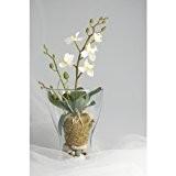 Orchidée artificielle ZEHRA en motte avec racines aériennes, crème, 32 cm - fleur artificielle / orchidée plastique - artplants