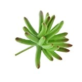 Paysage de Miniature Artificielle Cactus Sedum Décor Végétal Feuillage Bonsaï en Plastique 7.5cm Vert