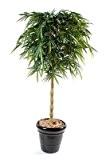 plante artificielle, semi-naturelle Bambou new bouddha 180cm - taille : 180cm
