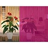 Rose décoratif Window film teinté solaire vitrail papier Vinyle mignon 1.52*3m