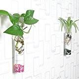 siyaglass Lot de 2cristal murale en verre à suspendre Fleur Vase Fleurs Terrarium Boîte Pot de fleurs forme cylindrique