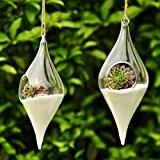 Siyaglass Lot de 2vases/ pots à fleur en verre à suspendre Décoration pour maison, terrarium Forme ovale