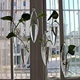 siyaglass Terrarium en verre à suspendre Air Pot Vase folower Pots Lot de 4