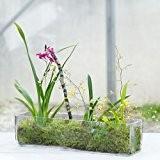 Solavia Bonbonnière en verre rectangulaire basse Flower Vase pour bouquet de mariage disposition 30 cm de long
