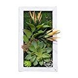 Support mural 3D Fleurs Artificielles Succulente plantes Décoration Vase avec cadre photo en bois imitation forme fleurs à l'aloe, 14x ...