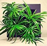 tableau végétal à faire soi-même sans plantes technologie mur végétal (Gris taupe)