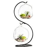 Vase en verre à suspendre Plante pour terrarium Avec Support en métal en forme de S 2Globe