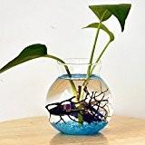 Vase en Verre Transparent pour Plante Fleur Réservoir de Poissons Décoration de Table