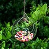 Vase en Verre Transparent Suspendu Forme de Boule pour Plantes Fleurs Décoration