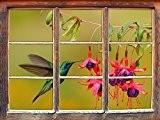 Vert Hummingbird potable à partir du nectar des fleurs Fenêtre en 3D look, mur ou format vignette de la porte: ...
