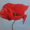 Painting - coquelicot1