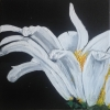 Painting - marguerite 1