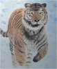 Painting - Tiger