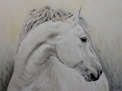 Painting - White horse