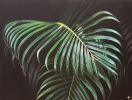 Peindre - Palm Tree Leaves
