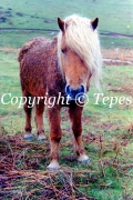 photo animaux cheval nature animal montagne : Solitaire