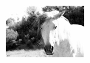 photo animaux cheval regard expression douceur : cheval