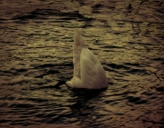 photo animaux cygne nature leman suisse : Il se cache