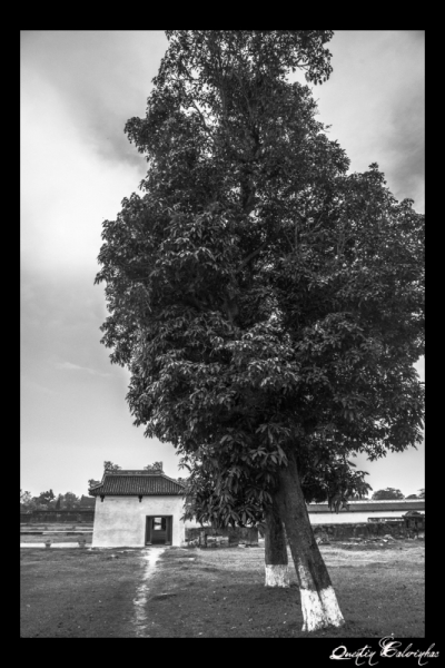 PHOTO arbre maison vietnam peace Paysages  - Tree of life