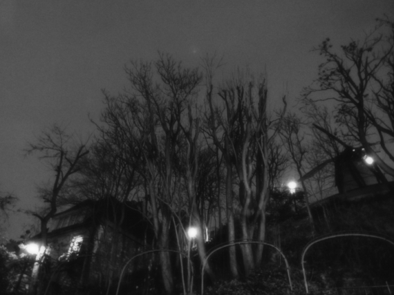 PHOTO arbre paris nuit montmartre Paysages  - Rue Lepic