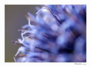 photo fleurs fleur macro campagne : Perception 053