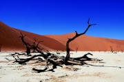 photo paysages arbres fossiles namibie desert : FOSS