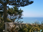 photo paysages pins maritimes arbres mer normandie : PINS MARITIMES