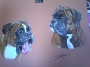 tableau animaux boxer chiens : duo