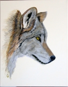 tableau animaux loup peinture toile animaux : 301 - Loup