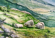 tableau animaux moutons collines irlande campagne : Moutons en Irlande