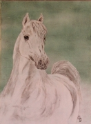 tableau animaux peinture toile cheval animaux : 253 - Cheval Blanc