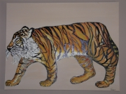 "tableau animaux tigre animal afrique : ""tigre"""
