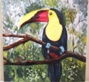 tableau animaux toucan branche foret costa rica : Le toucan
