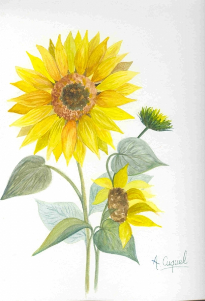 Tableau Peinture Fleur Jaune Soleil Tournesol Le Tournesol